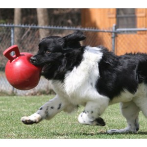 Jolly Tug-n-Toss Ball Medium (15 cm) pour chien