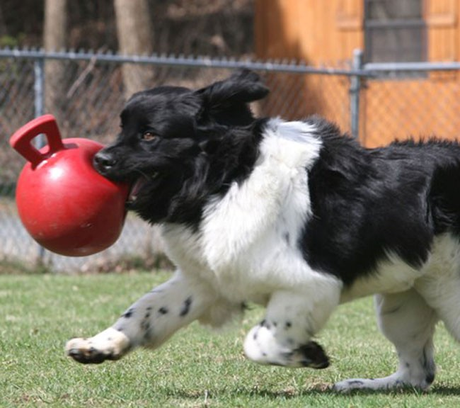 Jolly Tug-n-Toss Ball Small (10 cm) pour chien