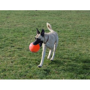Jolly Ball Bounce-n-Play large (20 cm) pour chien