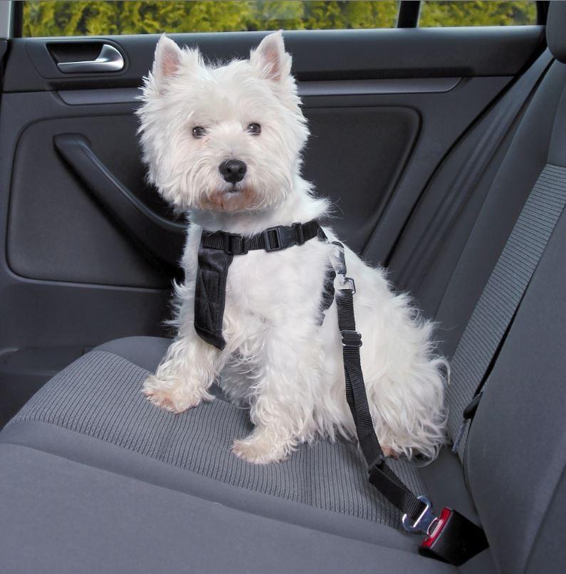 Harnais de marche avec ceinture pour chien