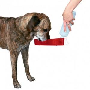Bouteille avec gamelle intégrée pour chien