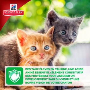 Hill's Kitten Healthy Development Thon Chaton