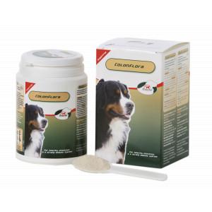 Primeval Colonflora pour chien