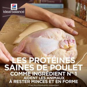Hill's Ideal Balance Adult Sans Céréale Poulet & Pomme de Terre Chien