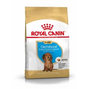 Royal Canin Teckel Junior pour chiot
