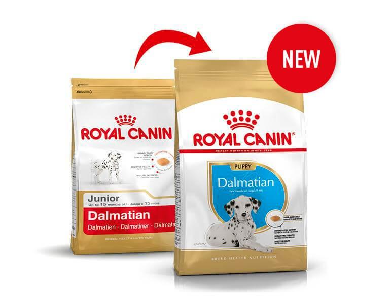 Royal Canin Dalmatien Adult pour chien