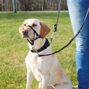 Top Trainer trainingsband voor de hond