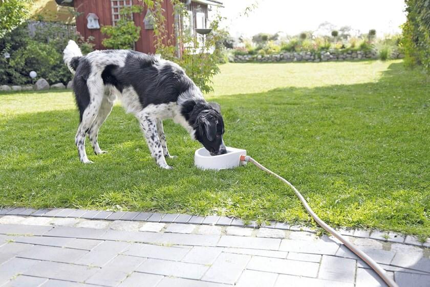 Outdoor drinkbak 1,5 lt voor de hond en kat