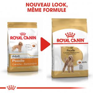 Royal Canin Caniche Adult pour chien