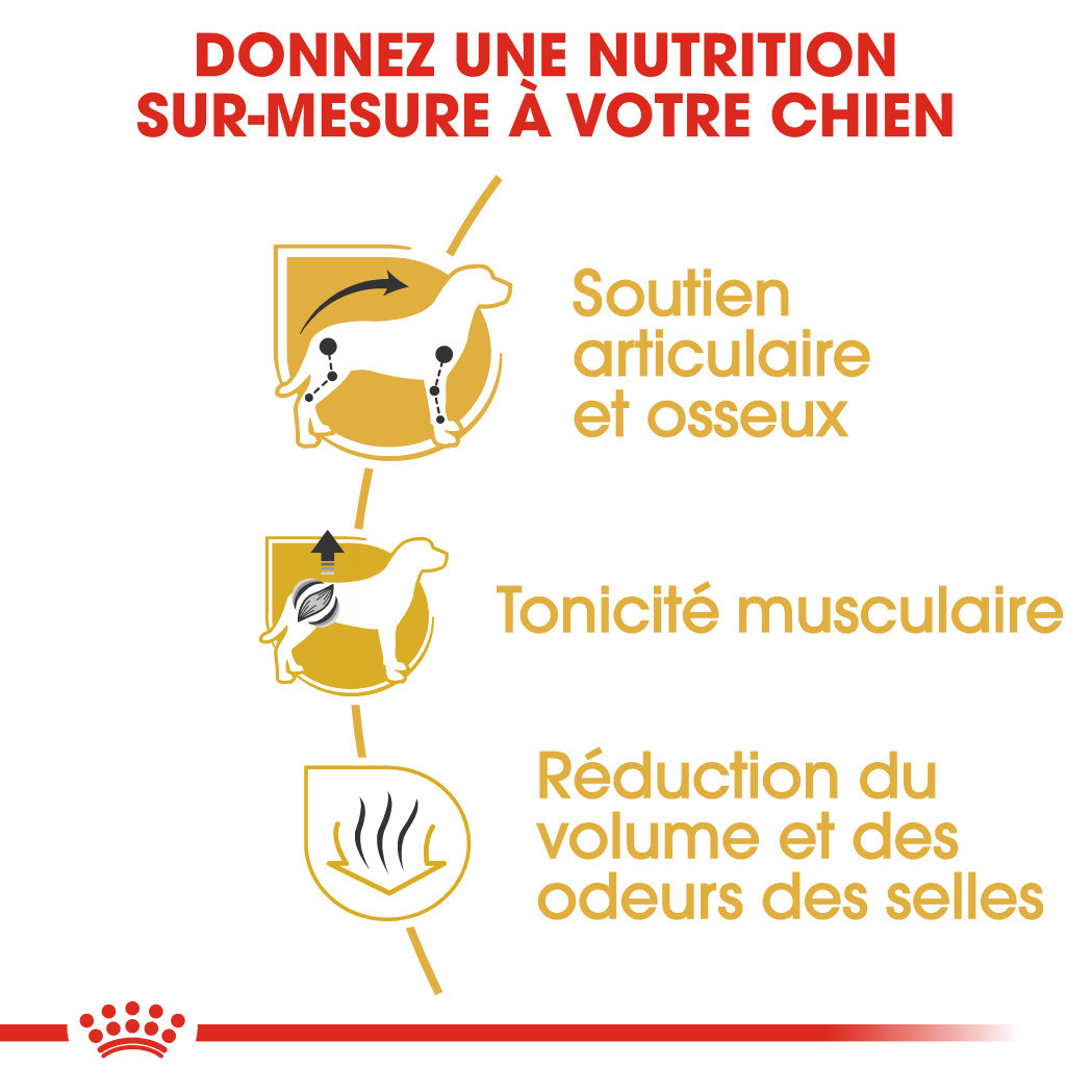Royal Canin Teckel Adult pour chien