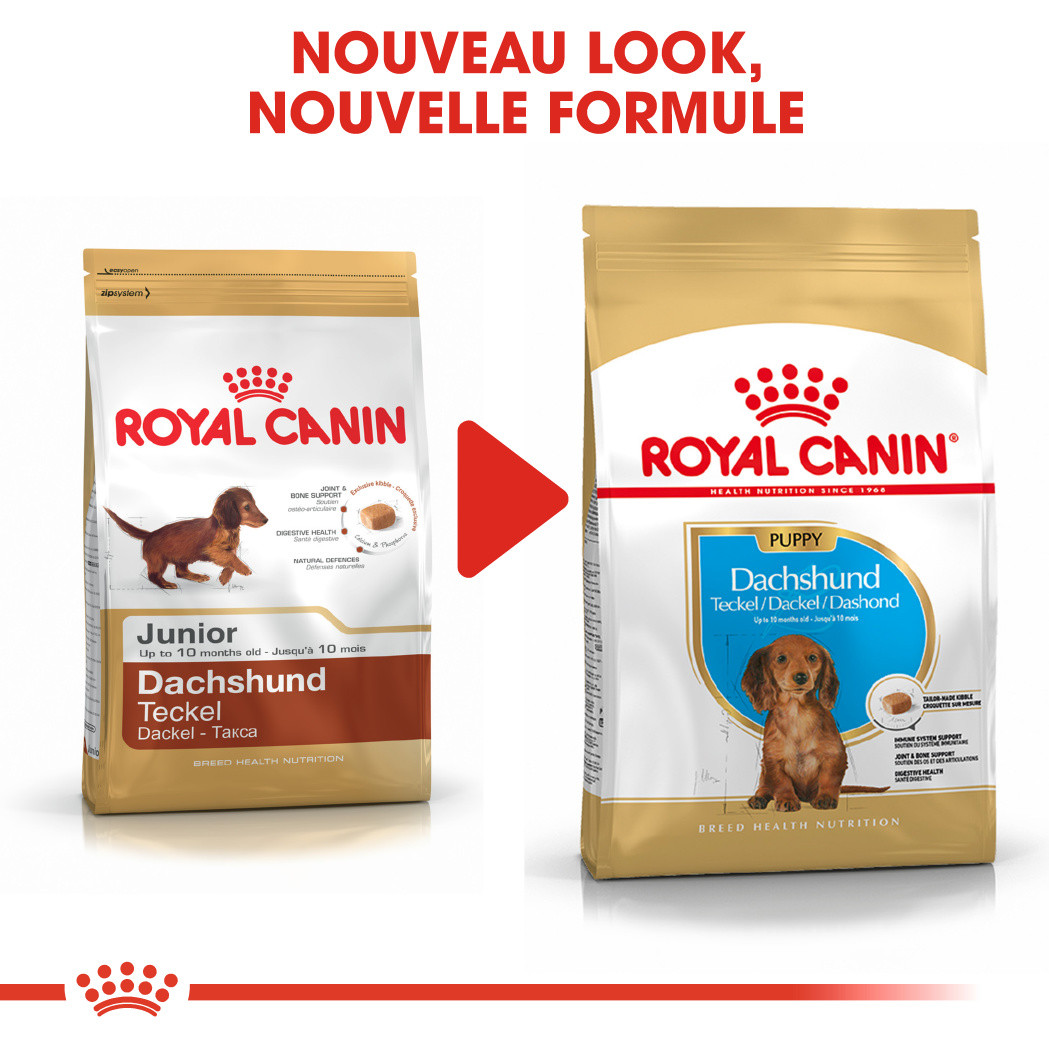 Royal Canin Teckel Junior pour chiot