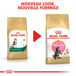 Royal Canin Chaton Maine Coon 36