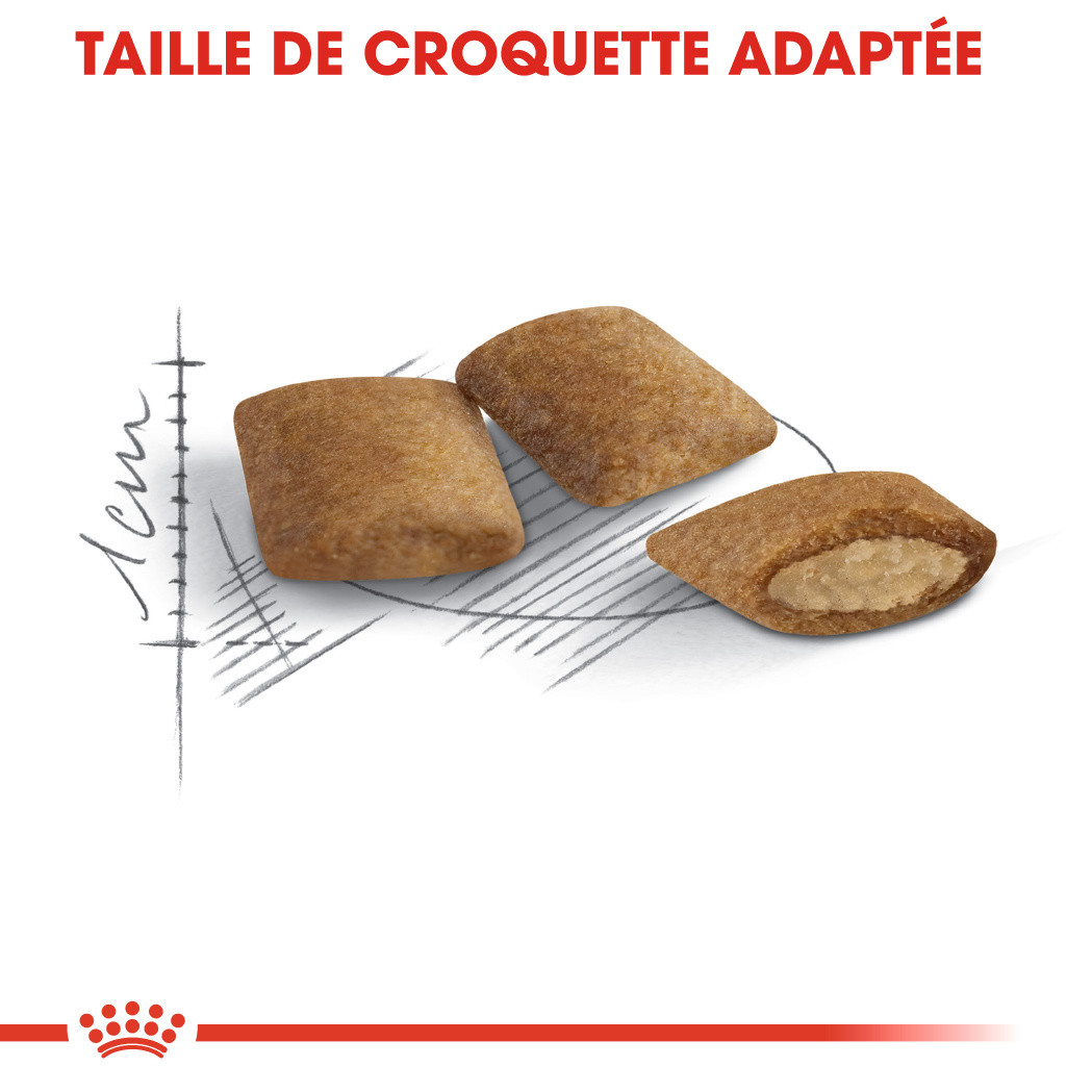 Royal Canin Ageing 12+ pour Chats