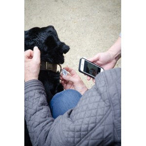 Spotted! ID Tag voor de hond - medium