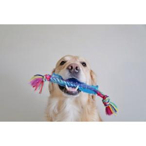 Petstages Orka Stick pour chien