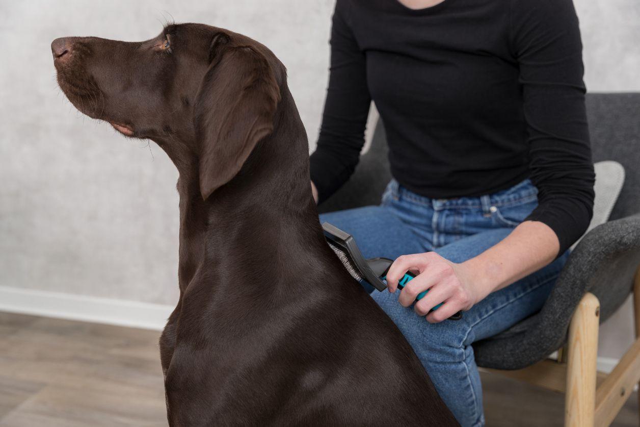 Brosse Toilettage pour chien et chat - Large -