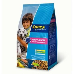 Canex Dynamique Chiot Puppy Grande Race