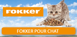 Fokker pour Chat
