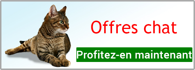 Offres chat